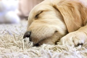 pet-stain-odor-removal-austin-tx